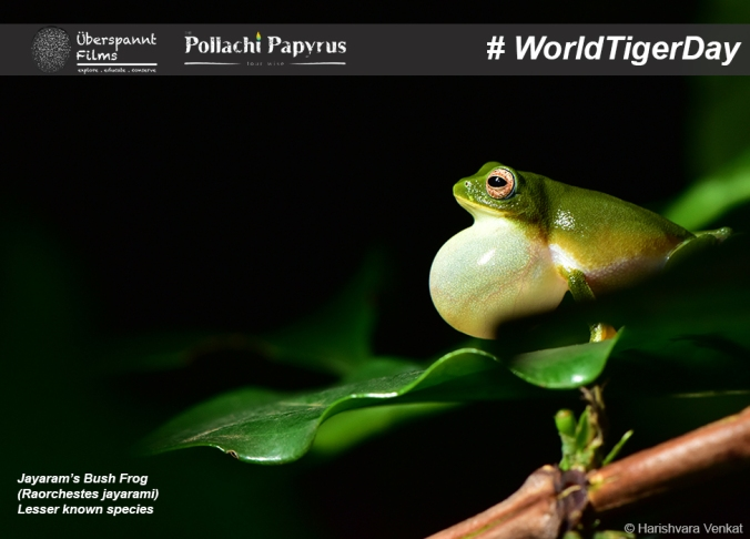 Raorchestes jayarami also known as the Jayaram's Bush Frog is found in Valparai. It is a recently discovered species of frog and not much information is available at this point.